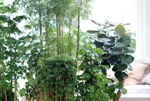 &Plantes Totems