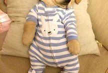 Dog in baby clothes ❤️❤️ / Too cute to dissmised