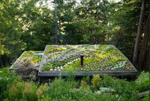 roof, green roof