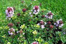 Gardening - Flowers