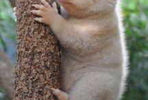 Sweet Pets☺️ / Forskellige søde og smukke dyr!