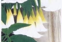 artist > isson tanaka(1908-1977)-田中 一村