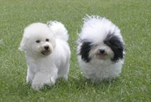 Purebred Breeders Handles Complaints From Customers / Purebred Breeders provides exceptional services for families looking for adorable, healthy purebred and designer breed puppies. Purebred Breeders communicates clearly and honestly throughout the adoption process and address any complaints or concerns relating to their service.  If you're looking for a puppy, check out http://purebredbreeders.com / by Purebred Breeders