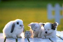 Adorable Animals / by Jennifer Sparacio Campesi