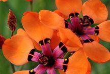 Blomster oransje