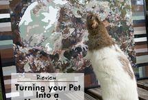 Small Animal Reviews