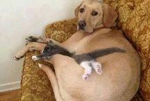 Fellow Animal Friends
