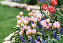 Spring! / Designs and plants that are ideal for spring!