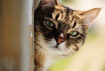 Katter 2
