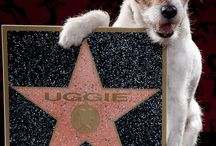 Famous Dogs / Stars with paws and infamous mutts / by Pawed