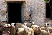 Farmhouse Fuzzies