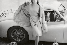 Glamorous Clothes and Glamorous Dogs