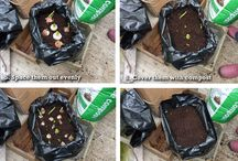 Spring Bulbs / Personalised Crate Bulb Planting Kits