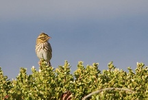 Birds / by Point Reyes National Seashore Association (PRNSA)