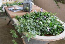 In the Garden / Gardening ideas