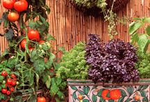 vegetables for balcony/warzywa na balkon