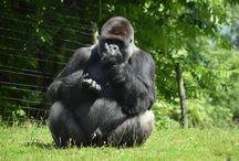 Gaia Zoo Kerkrade Netherlands