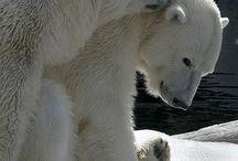 Arctic Love / Iceberg arctic landscapes