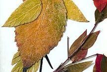 ptyaszek z lisci jesiennych