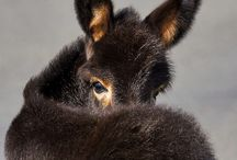 Donkeys. / Because they are my favourite.