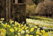 Spring Fling / by Lynn Stadel