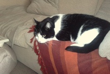 my cats  / two of the best cats in the world