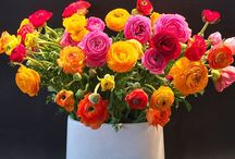 Spring Flower Arrangements / After a long, cold winter, color is welcome around the home. Whether these arrangements grace your entryway or your spring table, they are sure to brighten any day.