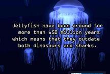 Facts - Animals