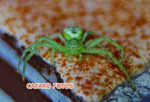 insectos / fotos de insecto con vision macro, es un placer mirar por el visor de la cámara y ver un mundo distinto.