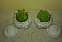 le mie spine e dintorni / Cactus e succulente. Realtà e aspirazioni spinose