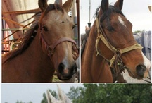 H4H - Horses Saved 2010-2011 / FYI - NOT all horse saved in 2010 and 2011 are posted.  We joined Pinterest in March, 2011...see the collage for a full listing of the horses saved in 2010 & 2011.