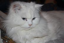 Valentina / My cat