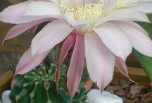 piante grasse///////// / le mie piante preferite.veri capolavori della natura.creano attorno pace e serenità