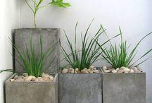 Plants home decoration