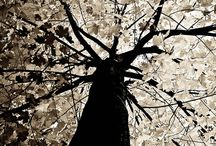 Tree of life / by Trish Robinson