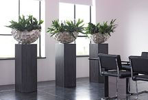 Live Office Plants / A selection of living plants/displays, perfect for any office.