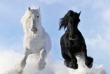 Horses / by Kimberly Whitney