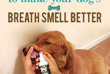 doggie breath