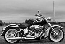 Harley / by Scott Anderson