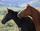 Horses/western