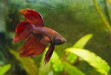 Aquarium fish deseases