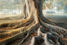 Beautiful tree's / by Michael Dominguez