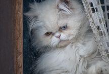 Cats & Windows