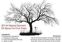 Fruit Tree Care / Gardening