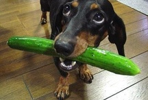 Doxies / by June Poe