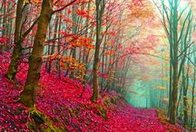 Enchanted forests
