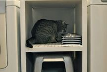 Elevated cat feeder