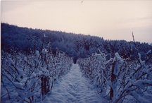 Vignes Perron Beauvineau