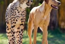 Animals ~ Curious Friendships / by Coralie Jones