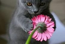 pink thingymabobs i LOVE!!!! / by Jennifer Fair Whisenhunt